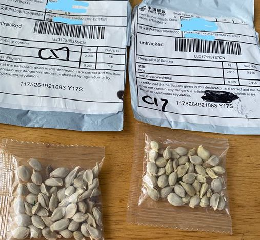 Image courtesy Washington State Department of Agriculture - seeds from China