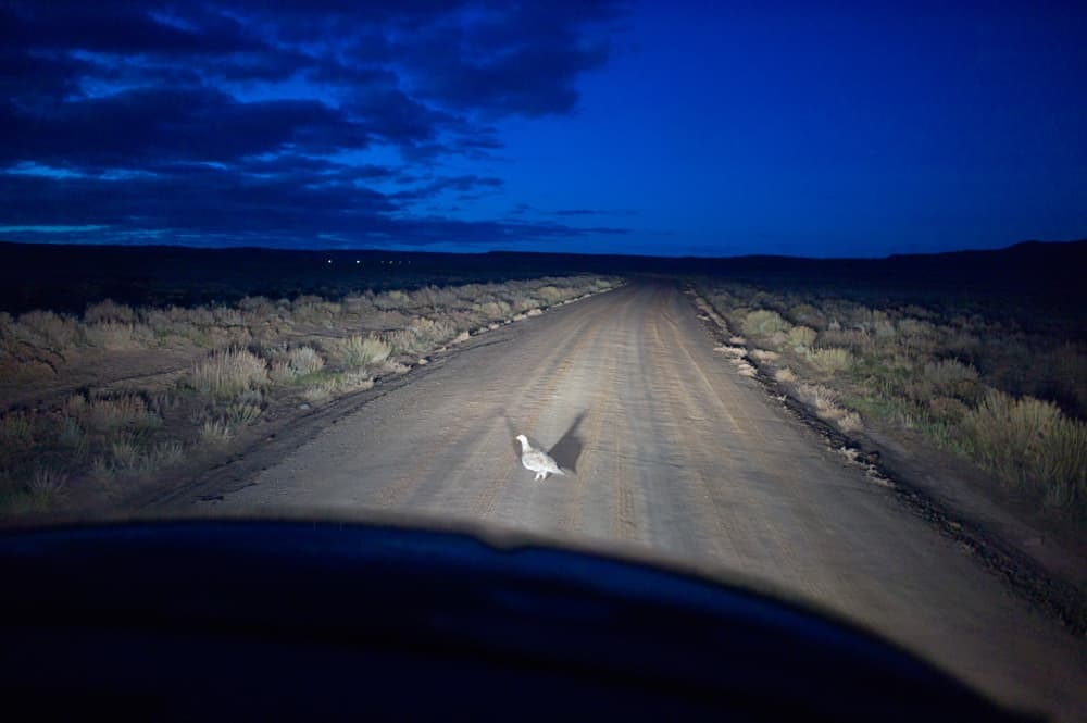 Grouse-in-headlights