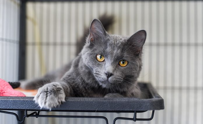 Ash is available for adoption at the City of Gillette Animal Shelter. (Photo: County 17 / Brooke Byelich)