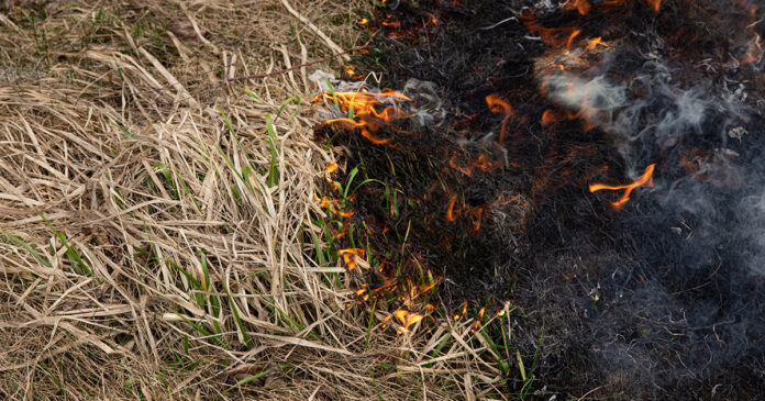 Stock image of dry burning grass in a field